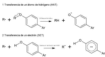 Figura 1. Mecanismo de actividad antioxidante