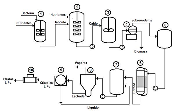 Proceso de producción de L-Fe por la ruta fermentativa